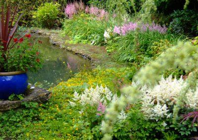 Garden July 2012 011