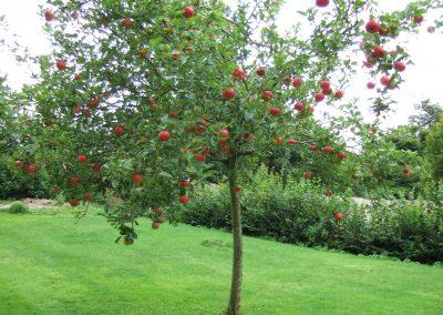 garden 12th August 033